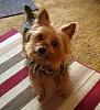 Who's a good boy??-yf-mischief.png