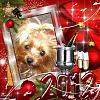 Happy New Year!!!!-new-year-2011.jpg