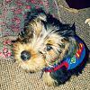 My likkle chewie!-chew.jpg