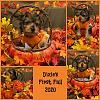 Fall pictures-picmonkey-imagegtgtgtgyt.jpg